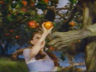 Picture of Dorothy picking apples from a tree